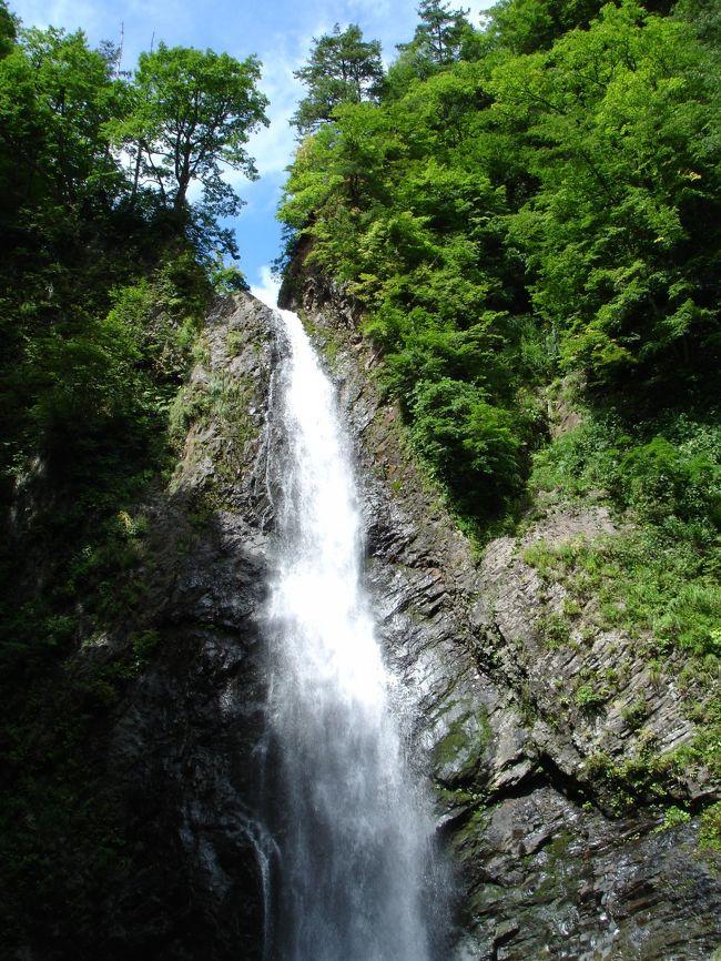 白神山地は青森県(西目屋村、鯵ヶ沢町、深浦町)から秋田県(藤里町、八峰町、能代市)にかけて広がり総面積13万ヘクタールのブナの原生林で1993年12月に世界遺産に日本で初めて指定された。<br />ブナは葉っぱがスプーン状になってて雨を受け枝を流れ幹(樹幹道)をつたって土に染みこむ。<br />湿気が多い。