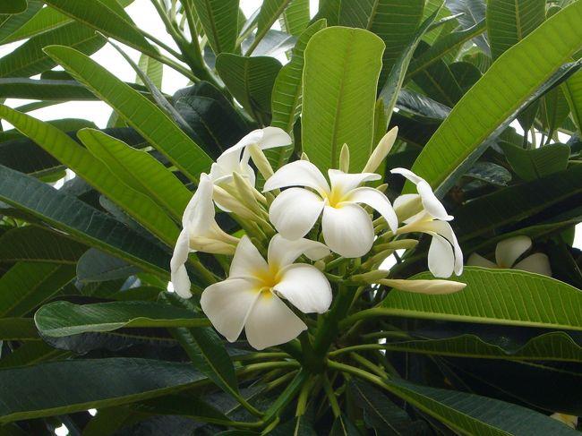 Hawaii<オアフ島> 5泊7日 (後編/08月20日~ )