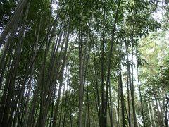 京都旅行(1) 嵯峨嵐山