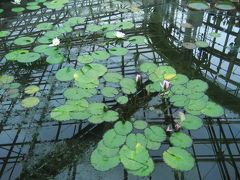秋バラ・フェスタ終了間際の神代植物園(2)もっと時間が欲しかった大温室