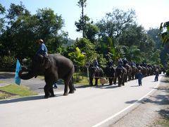 ランパーンの象保護センターに行ってきましたぁ。