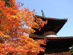 京都('07 紅葉狩り)