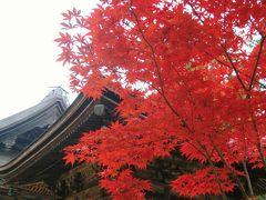 龍神温泉から高野山紅葉の旅