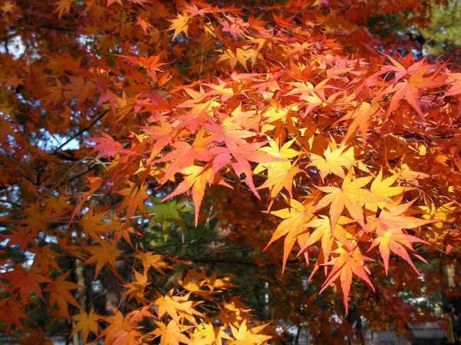 昨年に続き今年も紅葉の季節の京都を満喫してきました♪<br /><br /> ☆ 旅のPhotoレポート : <br />  http://homepage3.nifty.com/bon_voyage/report.htm