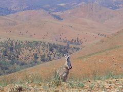 南オーストラリアワイナリーめぐり(1) フリンダースレンジ国立公園編  2007年11月