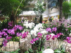 2007秋、ギリシャ・エジプト旅行記(4):11月29日(4)シンガポール・チャンギ国際空港