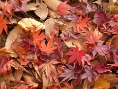 紅葉を探しに小石川後楽園
