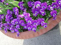 花を楽しむ春の備北丘陵公園