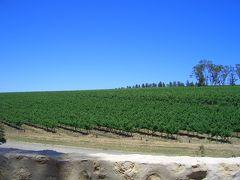 南オーストラリアワイナリーめぐり(4) マクラーレンベール編 2007年11月