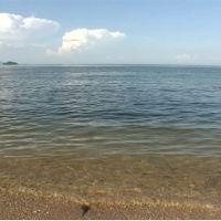 【動画あり】 津田の松原 老松の巨木と極上のビーチ!