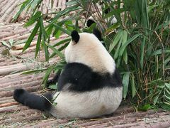 パンダ大好き!