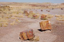 化石の森国立公園 *** グランドサークル12日間の旅 (15)