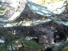 杉並区の大宮八幡宮で桜見る