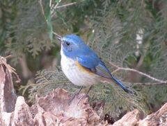 佐倉市散策(12)・・西印旛沼探鳥会と印旛沼周辺の野鳥を訪ねて