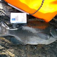 ★2008年 大分県南の磯で「初釣り」・・・の旅。