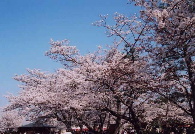 イエローナイフに行くために新調したフルマニュアルの一眼レフカメラを持って国内初の撮影にふらっと行ってきた。十三までバスで行って阪急で京都嵐山へ。私にとって初めての嵐山。何も考えずに一人で行って来たけど・・・。あまりの人混みにびっくり。それでも人ごみの中撮影してきた嵐山の桜の写真をUPしました。