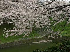 2007年 北の丸公園の桜