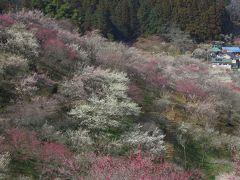 春爛漫 日の出山から吉野梅郷へ