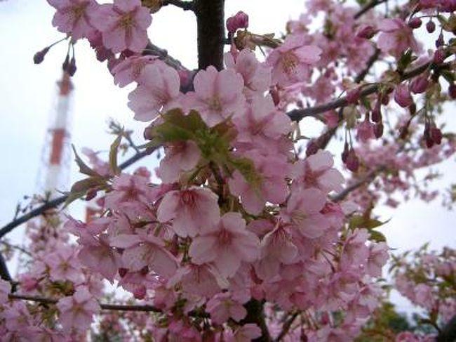 時間が開いたのでいわき市南部へドライブ。<br />さすがにまだ桜はと思いつつ春探しスタートです。