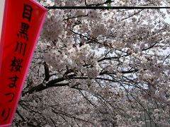 中目黒 目黒川の桜