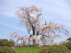 京都('08 花見)