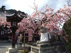 日帰り京都散策(第2回)。嵐山をお散歩