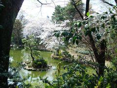 鍋島松涛公園の桜