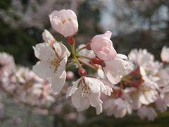 春の京都へ in 2008