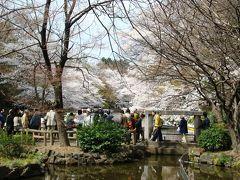 スワンボートから桜に手が届く井の頭公園