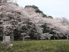 西方寺配水池ソメイヨシノ見学会