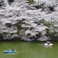 千鳥ヶ淵で桜を愛でる