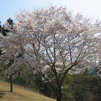 桜の咲く藤岡で午後のゴルフを楽しむ