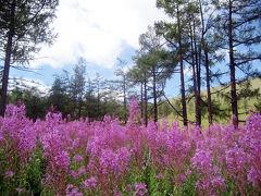 モンゴル・テレルジ国立公園