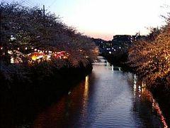 横浜大岡川桜プロムナード 平成20年
