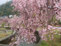 韮崎市神山町のわに塚の近くで見かけた枝垂