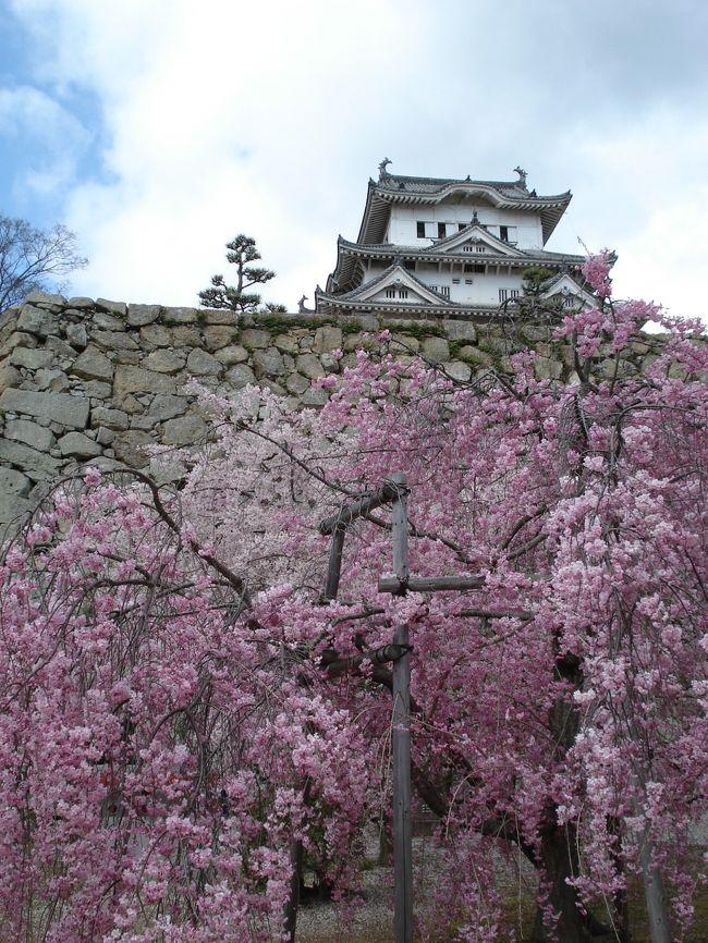 姫路城は外観の美しさにも感動しましたが、城内に入るまでに<br /><br />いくつもの門を通り抜けるその道のりに魅力を感じました。<br /><br />春は白壁とそれを覆うような桜のトンネルが何とも風情があり<br /><br />何百年も前の人々も同じ景色を見ていたと思うとその歴史的<br /><br />価値の重みを感じずにはいられません。<br /><br />今回、特別に乾小天守閣も拝観する事ができ間近に見上げた<br /><br />大天守閣の雄々しさは圧巻☆<br /><br />すっかり姫路城のとりこになってしまいました。<br /><br /><br /><br /><br />◆ 世界遺産 姫路城 ◆<br />  <br />姫路城は法隆寺とともに1993年12月、日本で初めて世界文化遺産に登録され<br />日本に現存する城の中でも世界的に高い評価を受けています。<br /><br />連立式天守をはじめとする独特の建築構造と白鷺城とも呼ばれる美しい形容、<br />要塞として精巧な意匠と工夫の凝らされた巧みな機能、そして城全体がよく<br />保存され、内曲輪の城郭建築がほぼ完全に当時の様式を伝えています。<br /><br />《姫路城大図鑑》 http://www.city.himeji.lg.jp/guide/castle/
