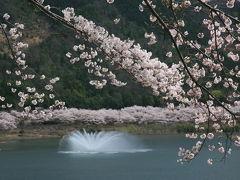 八千代湖(土師ダム)へお花見に