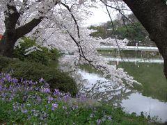 臥竜公園桜祭り