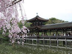 京都のお花見:?平安神宮