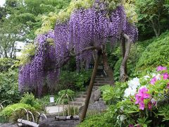 GWの鎌倉散歩:長谷寺、光則寺