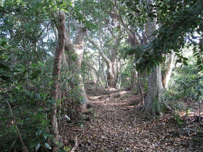 4月29日の祝日、自宅近くにある標高300メートル足らずの立花山に登ってきました。ここは樹齢300年近いクスノキが山頂近くに点在する原生林。清々しい春の陽気の中の山歩きは本当に気持ちよかったです。時々、道なりにホトトギスの声。春の陽光が所々に木々の青葉を照らし、マイナスイオンがクスノキの周りに感じられるような神秘的な雰囲気でした。 <br /><br />その一端を添付の写真で確かめてください。800万画素のIXYで撮ってますのでその神秘なクスノキの原生林が少しでも実感できると思います。 <br /><br />《立花山の参考ウェブページ》<br /><br />・「立花山へ行こう」→http://homepage2.nifty.com/ryutaro/<br /><br />