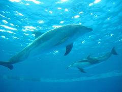 イルカに会いにアクアワールド大洗へ!