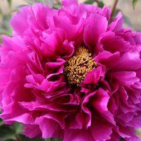 GWを植物園の花々と憩う