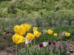 越後の里山に春!