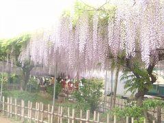 藤棚のカーテン-福島市上野寺-