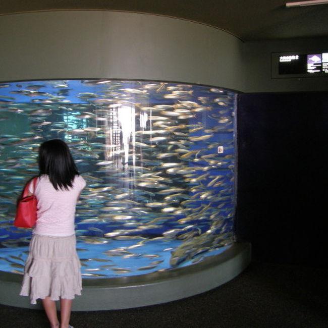日帰りドライブで茨城県の大洗へ。<br /><br />久々の水族館を楽しみ、リフレッシュをしてきました。<br /><br />ちなみに今回は前日に立ち読みした、<br />正方形写真の写真集に感化され、<br />今回はトリミングで正方形の写真で作らせていただきました。