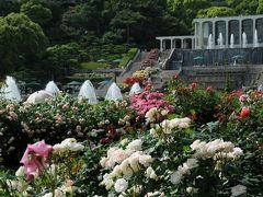 神戸 植物園めぐり(4) バラ全盛の須磨離宮