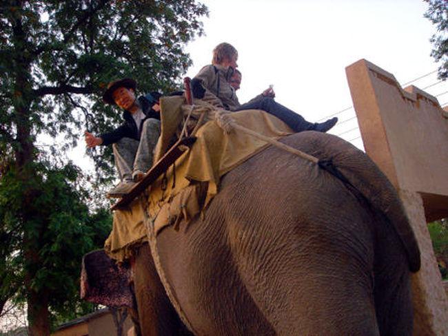 """♪インドのやまおくで しゅうぎょ~して~♪<br />20世紀の後半、小生の少年期に一世を風靡したテレビの特撮ヒーロー番組の主題歌である(歌える人は小生とほぼ同年代?)。<br /><br />かつて、レインボーマンが修行を行ったであろう聖地に野生動物を追い求めて旅をした。<br />インドといえば、人類の歴史上貴重な遺跡や文化の宝庫!<br />今や、国内の世界遺産の数も計り知れない。<br />また、インドは人口10億の人のるつぼ、雑多な宗教、街の喧騒という強烈なイメージだが、実は知る人ぞ知る動物大国!<br />児童文学の傑作「ジャングル・ブック」の舞台背景にもなった。<br />今回は、動物写真家・岩合光昭氏の取材手配も手がけた旅行社に依頼し、インド国内3つの国立公園をハシゴしてサファリを敢行!<br />ケニアなど東アフリカにも劣ることのない野生の王国・インドで撮影したジャングルの仲間たち…<br /><br />そのときの写真を、当方のホームページ「アニマル・ワールド」で公開中!<br />アドレス http://animalworld.starfree.jp/ からトップページを開いて、""""世界の動物たち""""をクリック、世界地図上の⑬または、右ウィンドウのインドをクリックしてインドのページを開いてお楽しみください。<br /><br /><br />この旅行記では、インド初の国立公園・コーベット国立公園をサファリしたときの模様(現場風景など)をリポートします!<br /><br /><br />"""