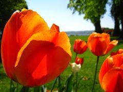 花いっぱいのÜberlingen