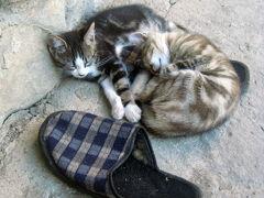 2008年ブルガリア・ハイライトその1:ブルガリアのネコちゃん